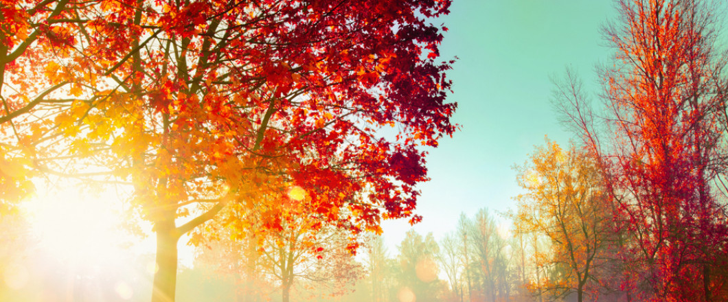 Call to get on our Fall & Winter Schedule!